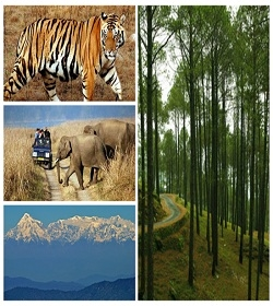 Hills & Wildlife of Uttarakhand