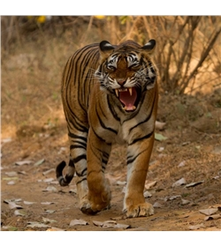 Into the wild: Ranthambhore